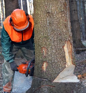 Tree Removal, Lawn Care in Lithonia, GA